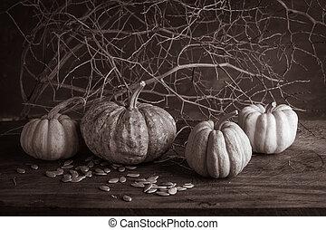 still life pumpkins