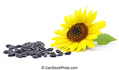 seeds and sunflower - still life. seeds and sunflower on ...