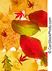 Still-life with Fall, Autumn leaves