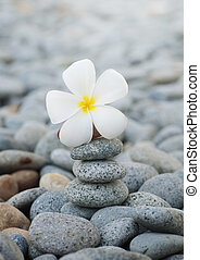 Frangipani flowers and pebbles