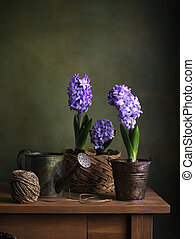 Still life with hyacinths in a pot