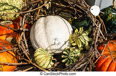 Still life with organic pumpkins in the hay.