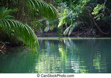 stilla, insjö, med, yppig, tropical växtlighet
