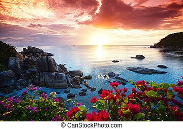 stilla, strand tillgripa, vacker, morgon härlighet, på, den,...