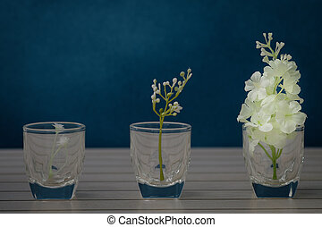 stilllife - Still life with flower in the glass vase on ...