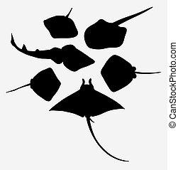 Stingray fish animal silhouette