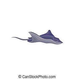 Stingray fish vector Illustration on a white background