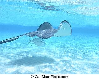 stingray, mar caribe