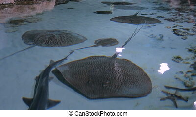 Stingrays with another marine fishes floats on the deep