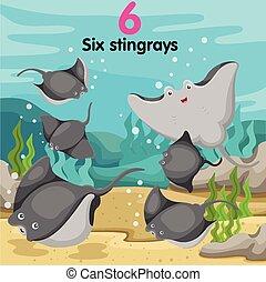 stingrays, zes, illustrator, getal