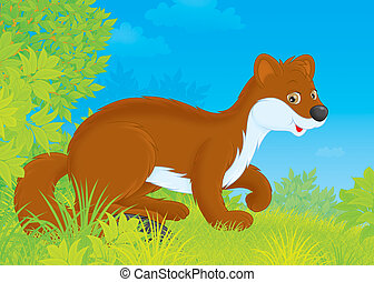 Stoat - Brown stoat walking in a forest