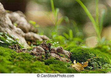 Stock - Green natural environment