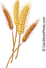 Stock Illustration : Wheat