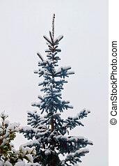 Snowy Christmas tree background