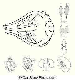 stock., organo, medico, simbolo., collezione, anatomia, vettore, disegno, icona