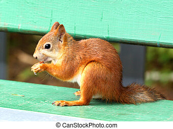 stock Squirrel eating a delicious nut
