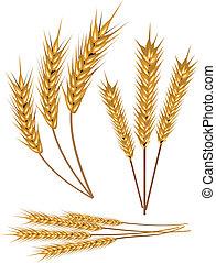 Stock Vector Illustration: Wheat, vector