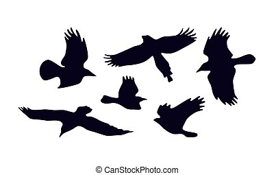 Stock vector set of soaring birds silhouettes