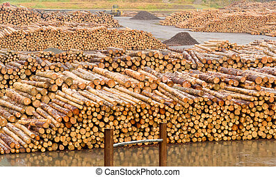 Stockpiled cut and trimmed tree trunks in an industrial timberyard to be processed in a sawmill into lumber