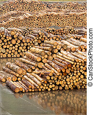 Stockpiled timber ready to be milled to lumber - Stockpiled...