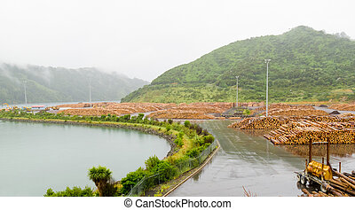 Stockpiled timber ready to be shipped - Stockpiled cut and...