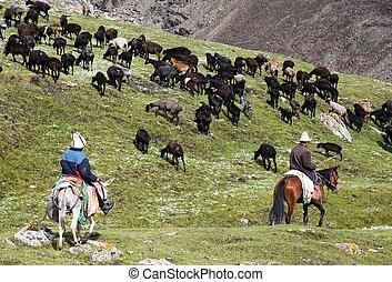 stockriders, con, multitud, en, alay, montañas, en,...