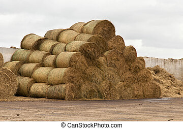 Stocks of hay for cows on a dairy farm.