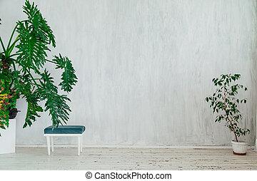 stoel, ouderwetse , kamer, planten, witte , groene