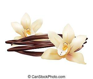 stokken ., vanille, vrijstaand, illustratie, realistisch, vector, bloemen, pictogram