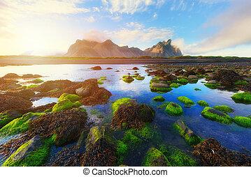 stokksnes, 山, 以及, 綠色, water-plants