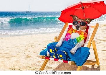 stol, strand, hund, siesta