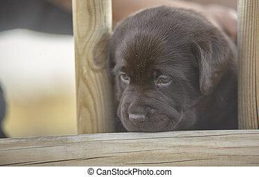 Stolen game moments of a labrador puppy #3