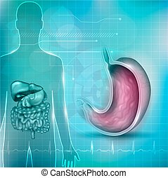 Stomach cross section anatomy and surrounding organs and normal cardiogram at the bottom, abstract technology background
