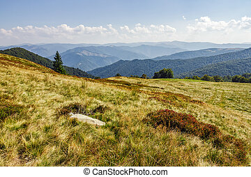 stone and spruce tree on a grassy meadow of the mountain ridge