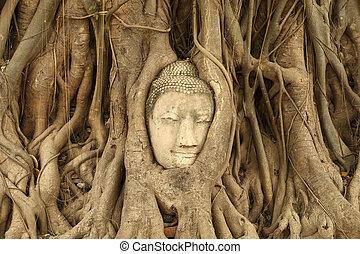 Stone budda head traped in the tree roots at Wat Mahathat,...