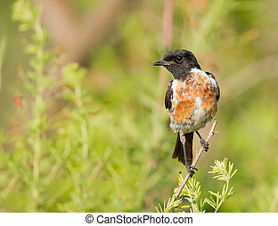 Stone chat against super background