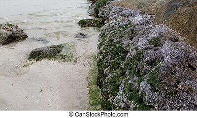 stone coast of Persian Gulf is covered with shell rock. -...