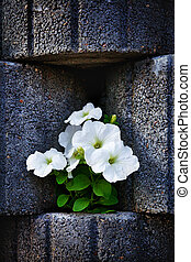 wall made of stone flowerbed with nasturtium