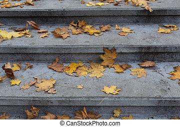 Stone grey steps in autumn park background - Stone steps...