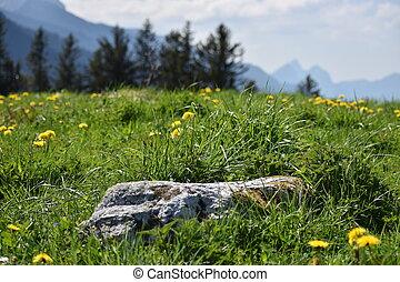 Stone in a meadow in Flumserberg in Switzerland 17.5.2020