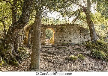 Stone Menhir de Petra Frigiata in Corsica - Menhir de Petra...