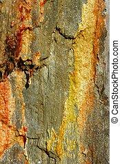 Stone moss texture golden, red, yellow, orange - Stone moss...