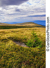 stone on mountain slope with forest - mountain landscape....