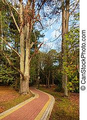 stone path for walks