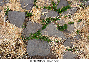 stone path in the green grass and dry grass