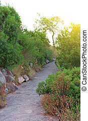 Stone path in the park at sunset.