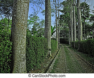 Stone Path Through Row of Trees