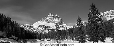 peaks of mountains on the background of spruce forest