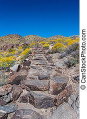 Stone Stair Case in Desert Bloom