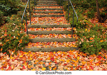 Stone staircase filled with colourful autumn leaves